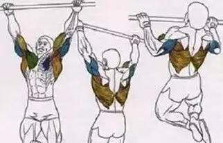 引体向上训练(一周两练)